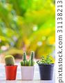 cactus 31138213