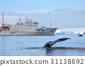 Humpback whale tail with ship, boat 31138692