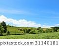 Hokkaido summer blue sky and Biei landscape 31140181