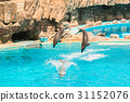 aquarium, dolphin, holiday 31152076