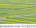 꽃밭, 봄꽃, 유채 31162234