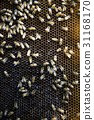 동물, 벌(곤충), 벌집 31168170
