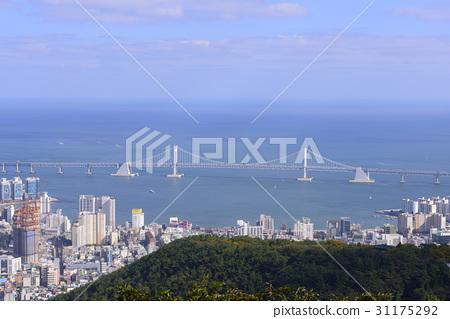 광안대교,금련산,수영구,부산 31175292