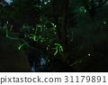 การสัมผัสหิ่งห้อยหลายชิงโมริยามะ 31179891