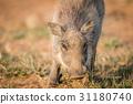 野生生物 动物 丛 31180740