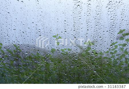 물방울,나뭇잎 31183387