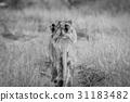 動物 貓 貓咪 31183482