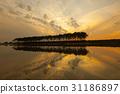 소나무, 실루엣, 충남 31186897