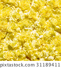 Bouquet of yellow flowers carnation 31189411