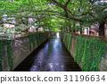 Meguro River in summer 31196634