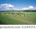 러시아, 목장, 자연 31204355
