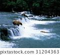 강, 곰, 미국 31204363
