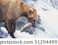 강, 곰, 동물 31204400