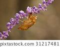 1, 곤충, 매미 31217481