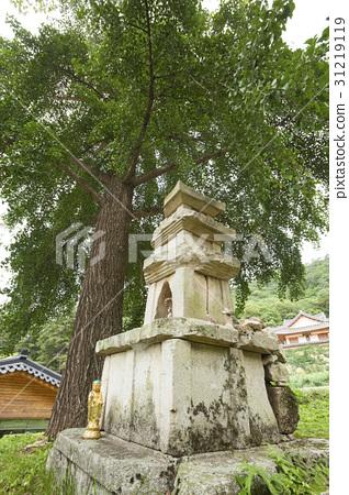 은행나무,석탑,대승사,사불산,문경시,경북 31219119