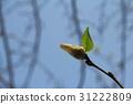 自然 春天 春 31222809