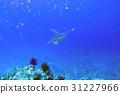 ภาพทะเล 31227966