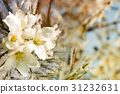 flowers on the tree covered with ice 31232631
