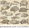Turtles - collection of hand drawings, freehands 31233892