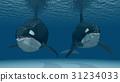 鲸鱼 海洋 海 31234033