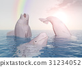 Beluga whales and rainbow 31234052