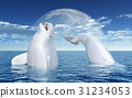 Beluga whales in front of the moon 31234053