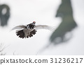 动物 野生鸟类 野鸟 31236217