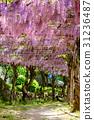 오노 미치 센 코지 공원의 등나무 31236487