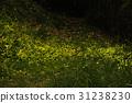 森中の精霊 蛍 31238230