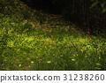 森中の精霊 蛍 31238260