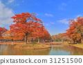 요요기코엔, 요요기 공원, 단풍 31251500