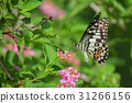 Beautiful butterfly perched on a flower. 31266156