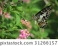 Beautiful butterfly perched on a flower. Insect  31266157