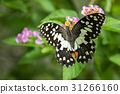 Beautiful butterfly perched on a flower. Insect 31266160