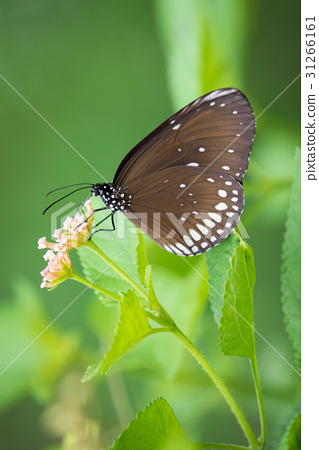 Beautiful butterfly perched on a flower. Insect 31266161