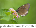 Beautiful butterfly perched on a flower. Insect 31266163