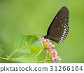 Beautiful butterfly perched on a flower. Insect 31266164