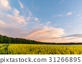 Cloudy sky over Rapeseed field with yellow plants 31266895