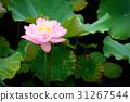 花朵 花卉 花 31267544