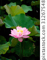 花朵 花卉 花 31267548
