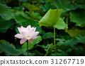 花朵 花卉 花 31267719