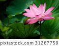 花朵 花卉 花 31267759