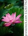 花 花朵 花卉 31267762