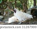 一隻雞 31267900