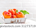 Fresh apricots with leaves 31273719
