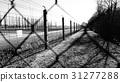 集中营 31277288