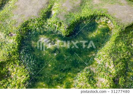 台灣 老梅 綠石槽 海 東北角 心形 綠色 背景 大自然 31277480