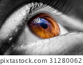 Brown human eye 31280062