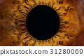 Brown human eye macro 31280069