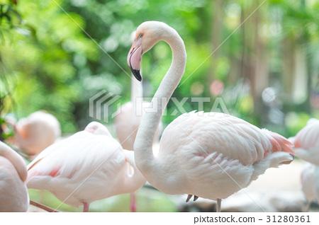 Flamingo Natural Backgrounds 31280361